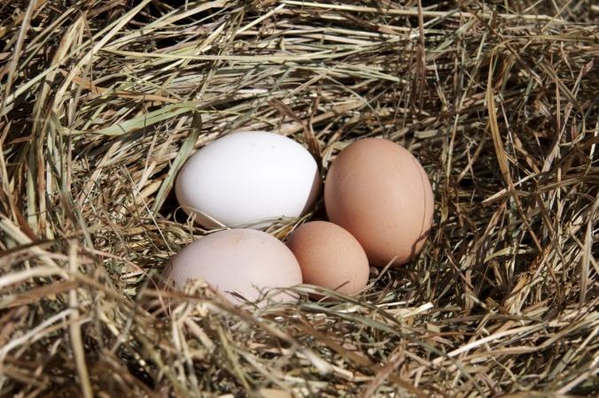 le uova nel nido